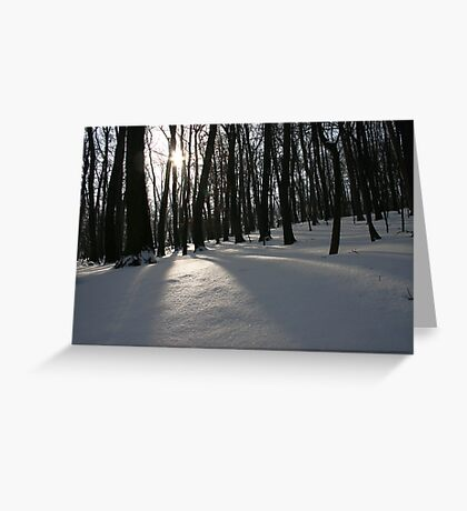 The Silent Forest Greeting Card