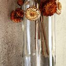 9.8.2017: Dried Flowers by Petri Volanen