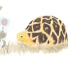 Tortoise and Passion Flower by Linda Ursin