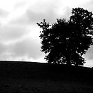 silhouette by misskitty