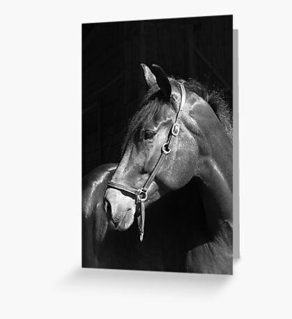 Exquisite Equine Greeting Card