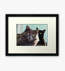 Cats in love. grey and black / photo of cute couple of cats Framed Print