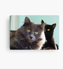 Cats in love. grey and black / photo of cute couple of cats Canvas Print