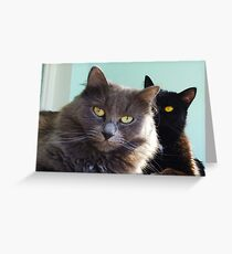 Cats in love. grey and black / photo of cute couple of cats Greeting Card