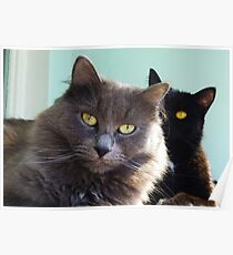 Cats in love. grey and black / photo of cute couple of cats Poster