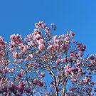 Magnolia Sky by KazM