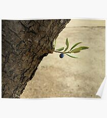 One black olive on an olive branch Poster