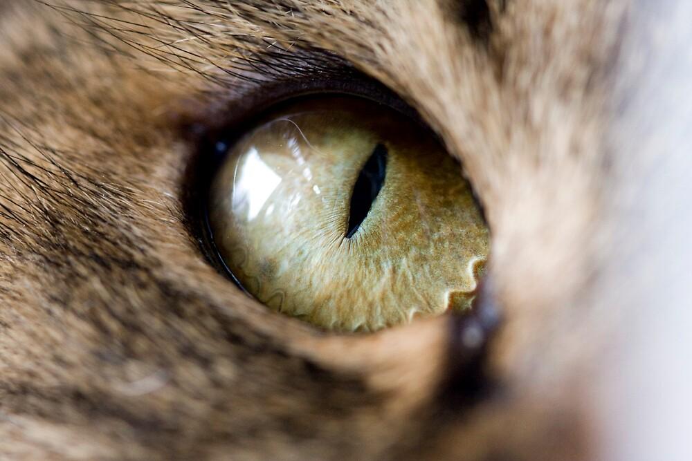 Cat eye by demistified