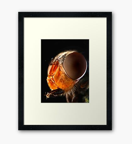 Face Value 2 Framed Print