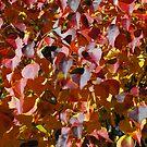 Autumn Splendour by Alison Howson