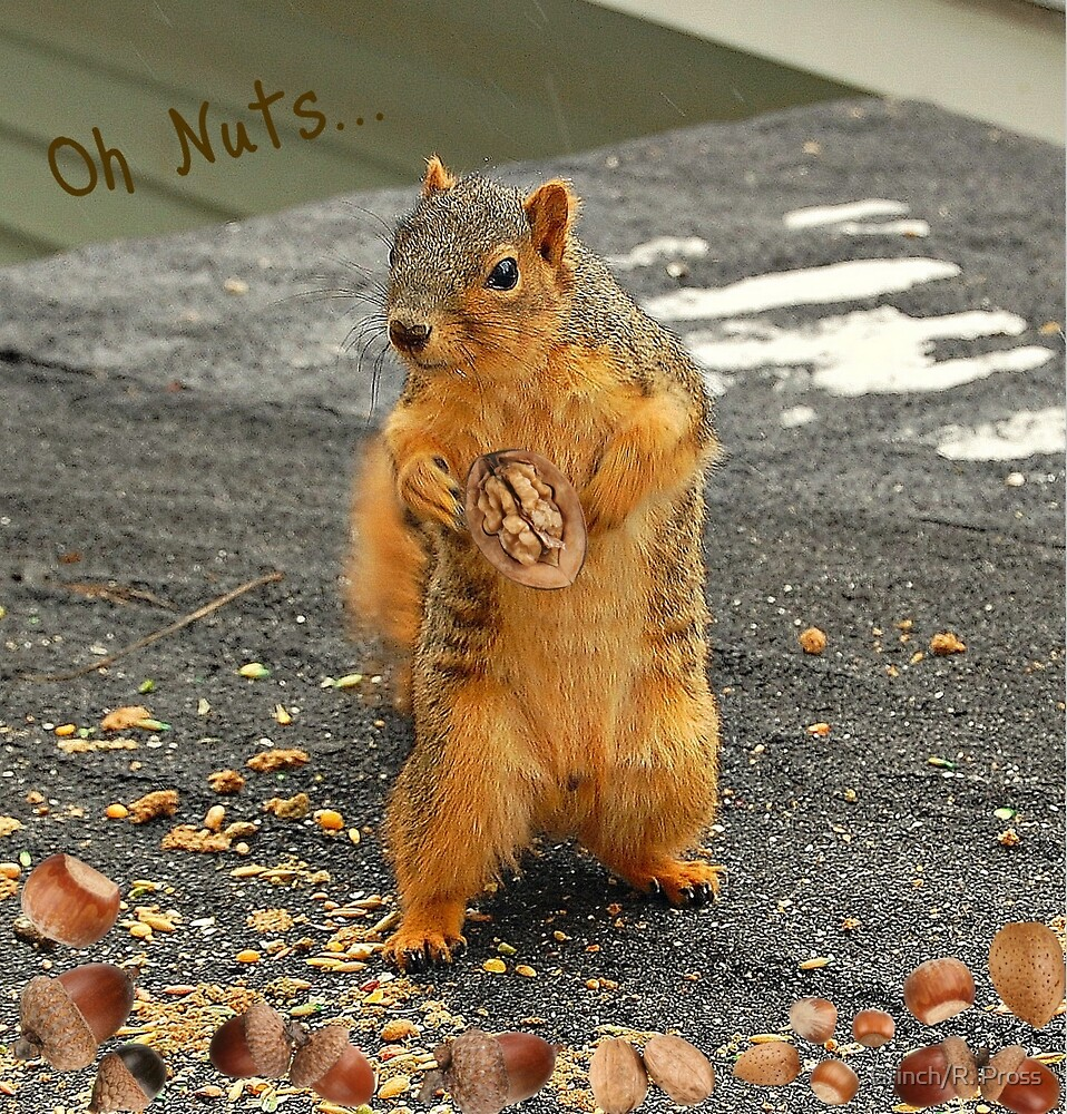 Oh Nuts.... by Grinch/R. Pross