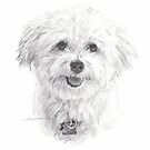 maltese dog drawing by Mike Theuer
