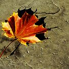 Autumn Leaf at Sunset by Robert Nicholson