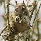 Squirrel by Anne-Marie Bokslag