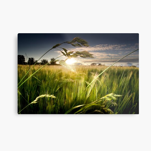 Green Isle Sunset Metal Print