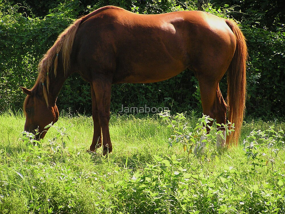 Ginger grazing by Jamaboop