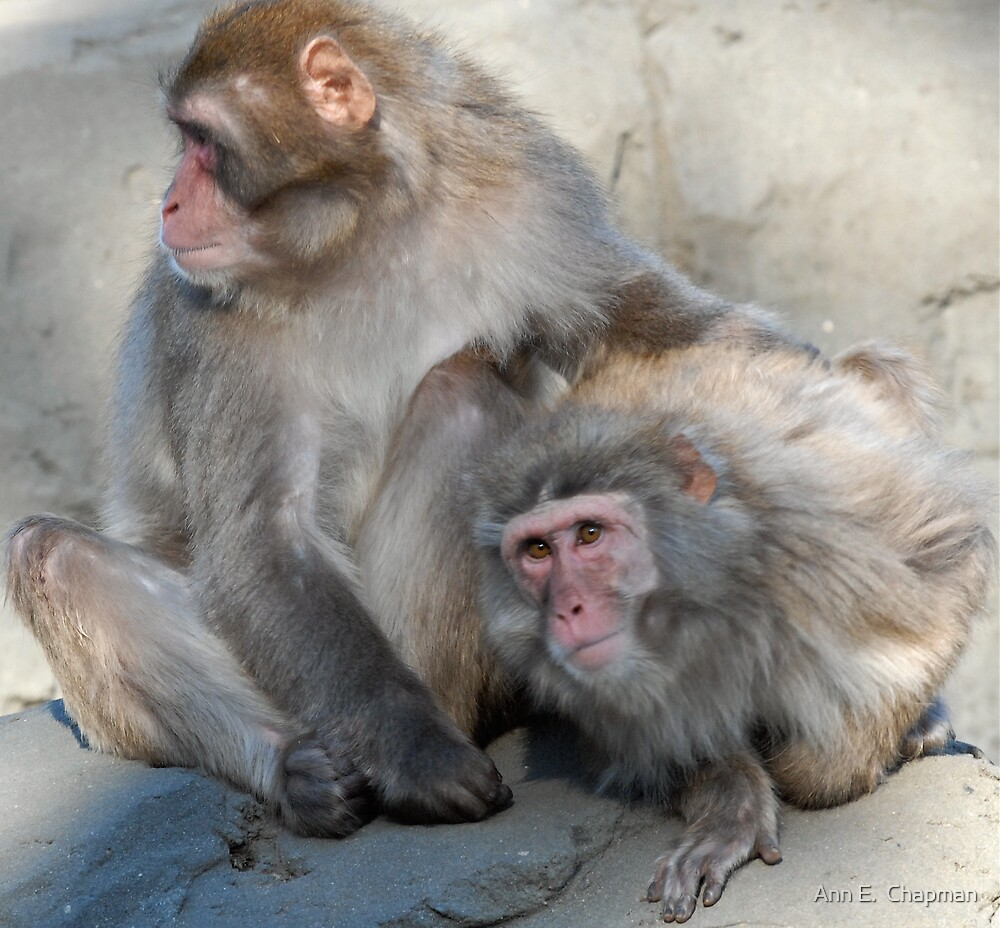 Snow monkey and mate by Ann E.  Chapman