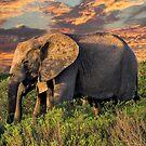 Elephants at Sunset by Lynn Bolt
