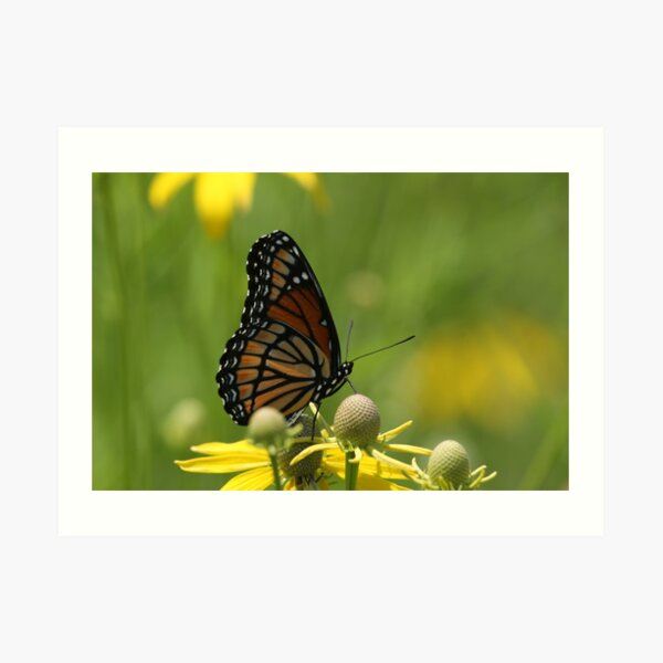 Butterfly and Blooms..2 Art Print