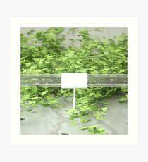 Ivy 2 Art Print