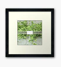 Ivy 2 Framed Print