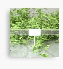 Ivy 2 Canvas Print