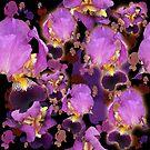 My Neighbor's Irises by theminx1