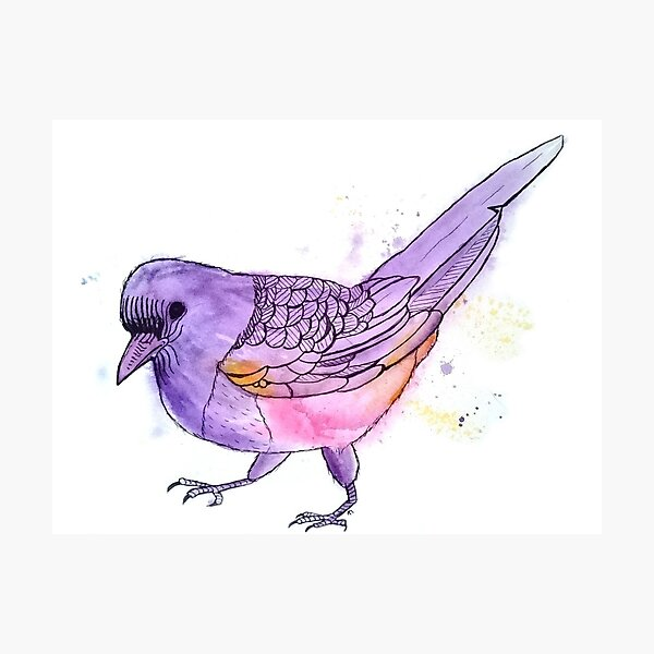 Young Magpie in Purple Photographic Print