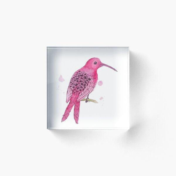Motionless Magenta Hummingbird Acrylic Block