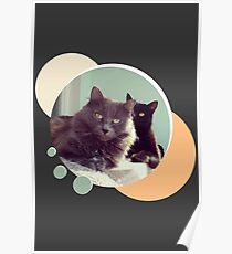 Cats in love. Pair of cats Poster