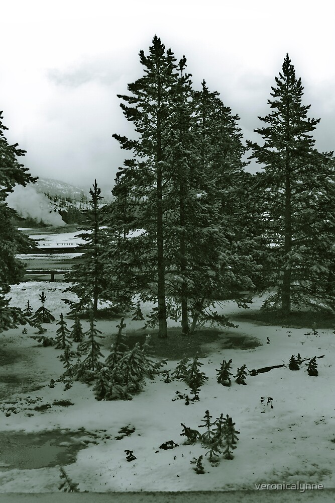 Yellowstone in Black and White #5 by veronicalynne