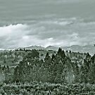Yellowstone in Black and White #6 by veronicalynne