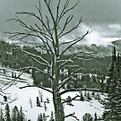 Yellowstone in Black and White #9 by veronicalynne
