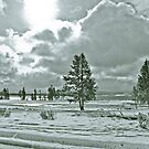 Yellowstone in Black and White #11 by veronicalynne