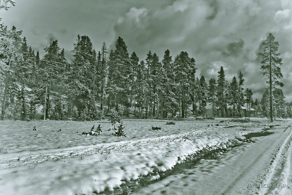 Yellowstone in Black and White #12 by veronicalynne