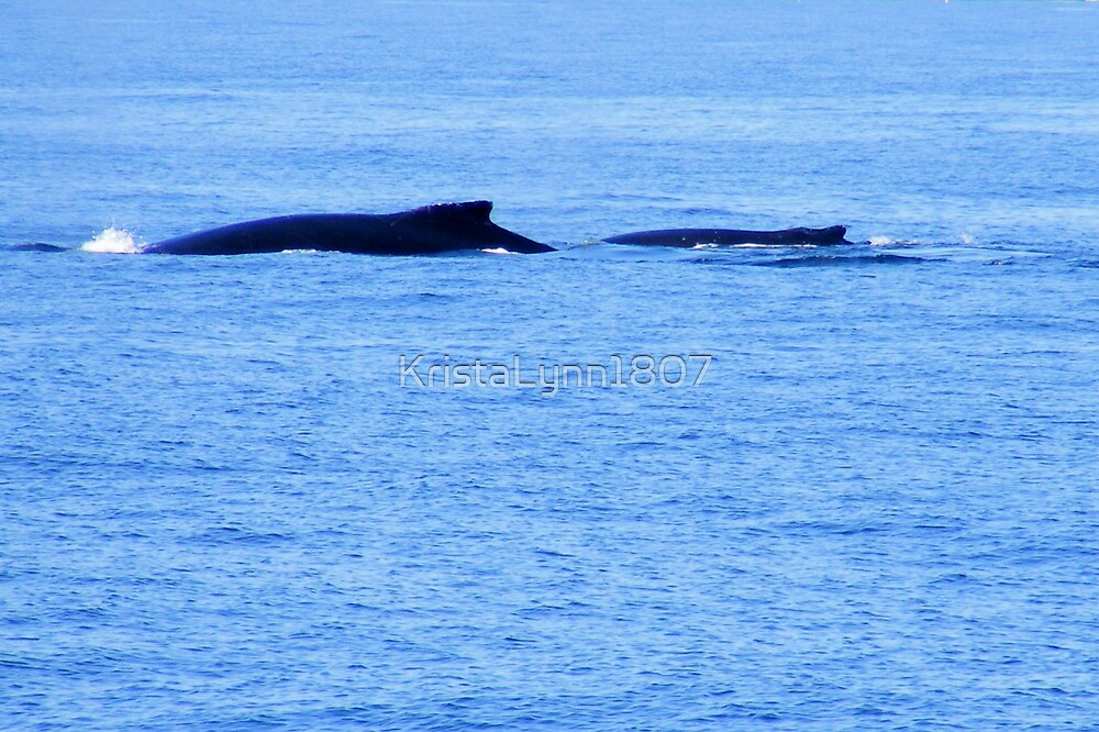 Mother And Calf Humpback Whales by KristaLynn1807