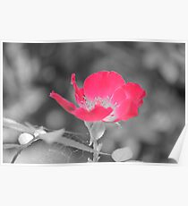 Red Flower with Gray Background and Spider Web (Original) Poster