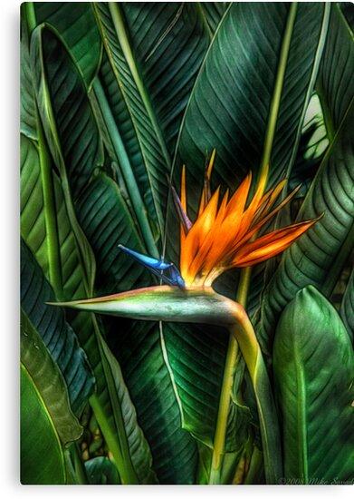 Bird of Paradise by Michael Savad