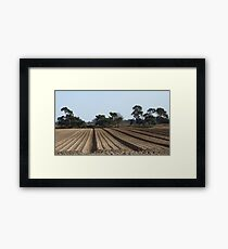 Tree Lined Straight Ploughed Field Framed Print