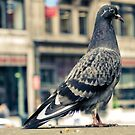 Portrait of a pigeon by rafaj