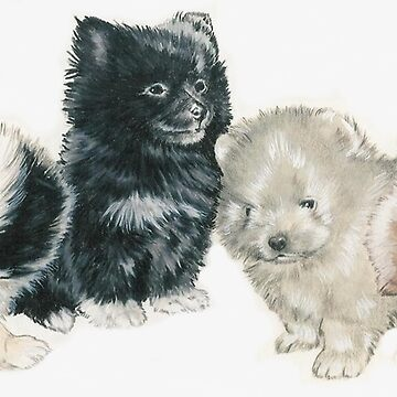 Pomeranian Puppies by BarbBarcikKeith