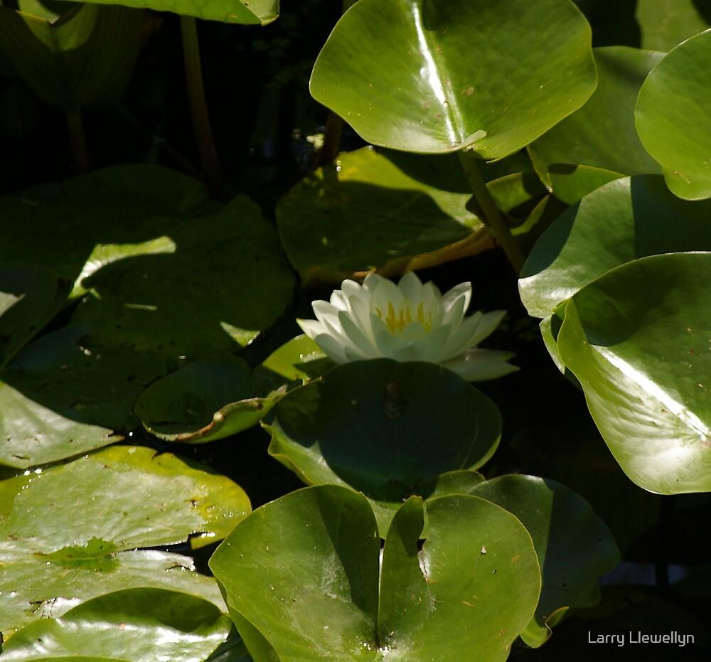 Hidden Beauty..... by Larry Llewellyn