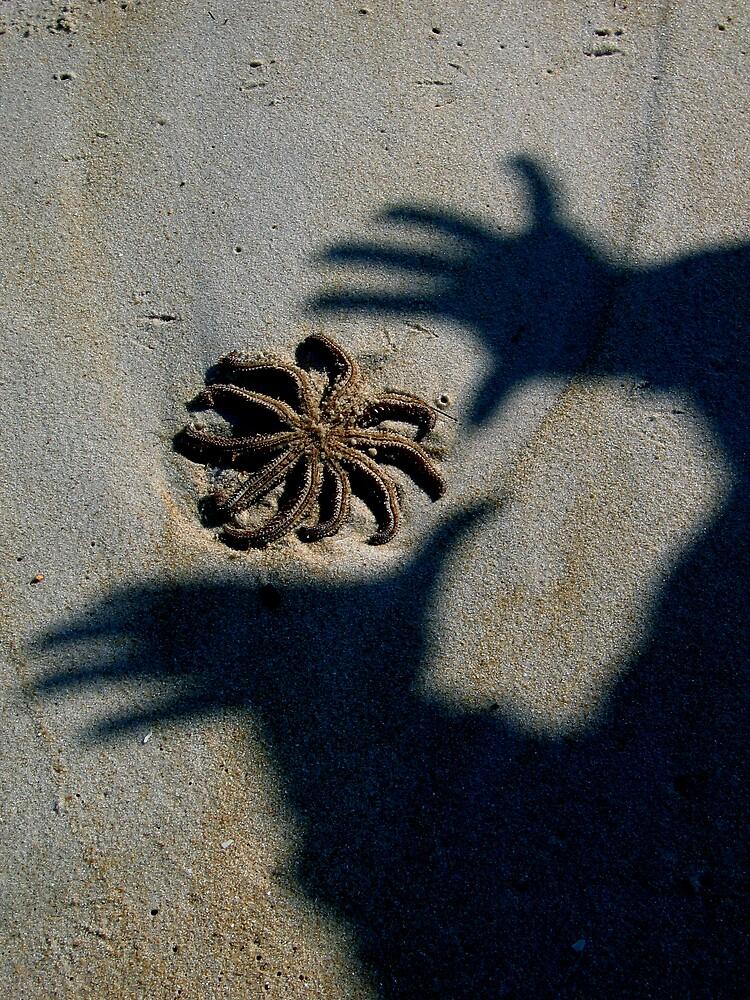starfish shadows by geikomaiko