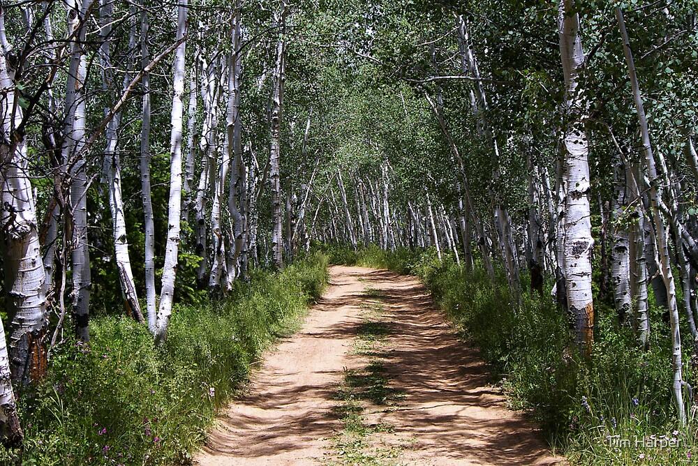 I'll take the dirt road...... by Tim Harper