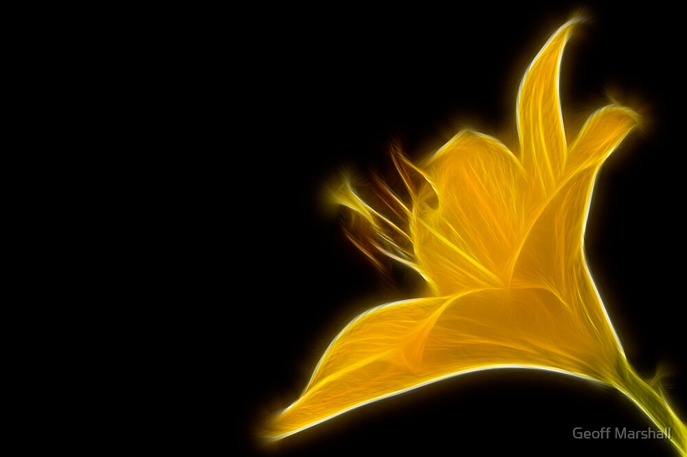 Yellow Lily by Geoff Marshall