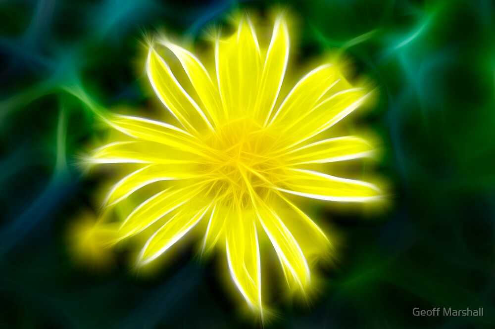 Yellow Flower by Geoff Marshall