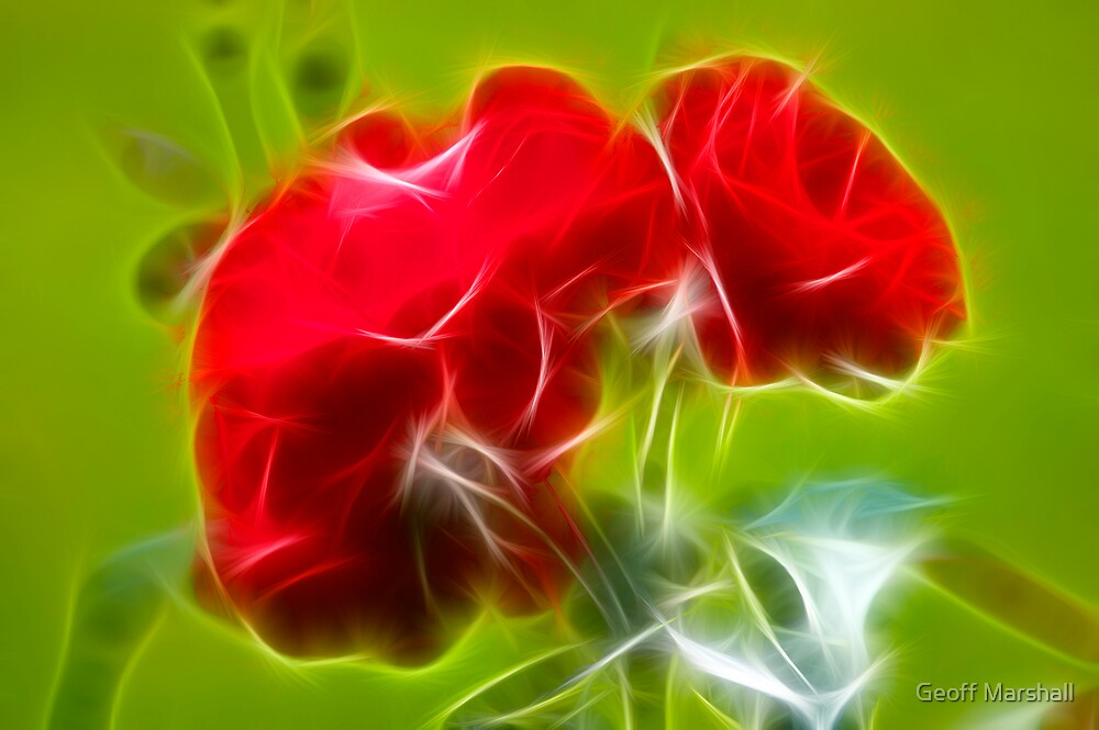 Red Rose by Geoff Marshall
