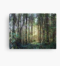 Coole Park forest sunshine Canvas Print
