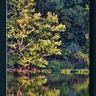 Lake Reflection by Sheryl Gerhard