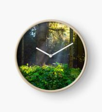 Evergreen forest in Carpathian Mountains Clock